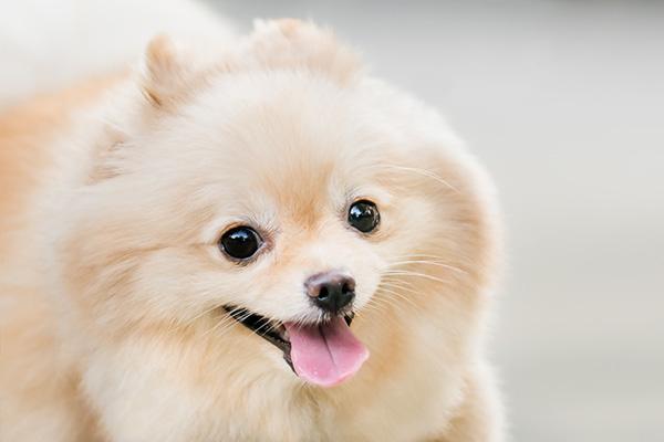 image-dog-boarding2