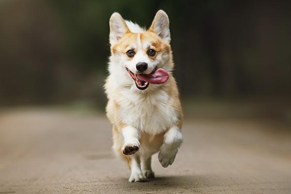 image-dog-daycare