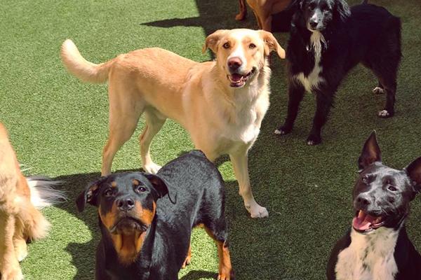 image-dog-daycare2